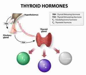 que es la tiroides 301